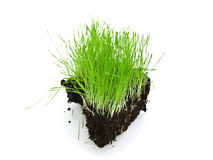 Grass island Stock Photography