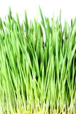 Grass isolated Royalty Free Stock Images
