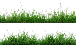 Grass isolated. 2 style green grass isolated stock images