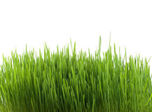 Grass isolated Stock Photography