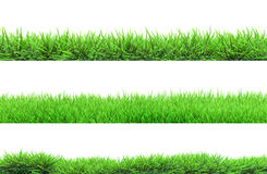 Grass isolated. On white background royalty free stock photos