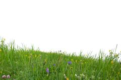 Grass isolated. Photo of grass isolated on white royalty free stock photography