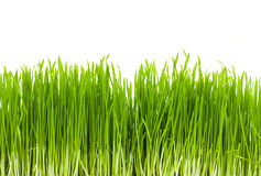 Grass, isolated Royalty Free Stock Photo