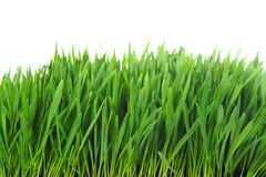 Free Grass Isolated Stock Photo - 9867730