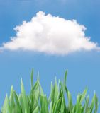 Grass isolated against blue sky- Stock Photo