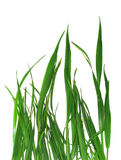 Grass isolated background Stock Photo