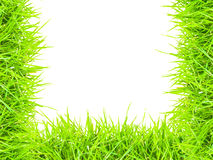 Grass isolated border U. Green grass isolated border U Royalty Free Stock Image