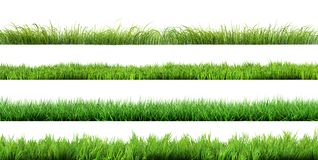 A grass isolated. Set on white background royalty free stock images