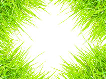 Grass isolated for  text  frame and background.  Royalty Free Stock Image