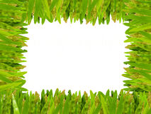 Grass isolated for text  frame. Grass isolated for picture  frame,text frame  and background Stock Photos