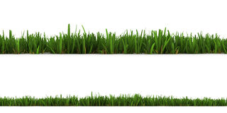 Grass isolated on the white. Background Stock Photo