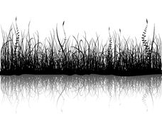 Grass - isolated on white Royalty Free Stock Photos