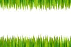 Grass isolated Stock Photos
