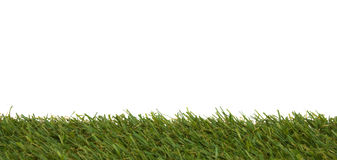 Grass isolated on a white background Stock Photos
