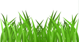 Grass isolated on white. EPS 10 vector Royalty Free Stock Photo