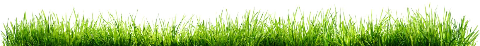 Grass Isolated On White. Spring Border stock image