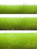 Grass. Isolated on white. Various visual angles Stock Photography