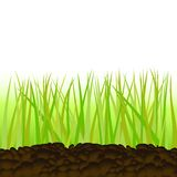 Grass in Isolation Royalty Free Stock Photography