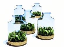 Grass in   jar. Stock Photo