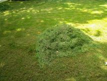 Grass just been cut. By lawn mower stock images