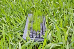 Grass in the keyboard Royalty Free Stock Image