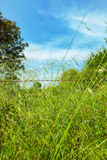 Grass in Kirazli Royalty Free Stock Photos