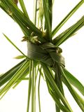 Grass Knot Royalty Free Stock Image