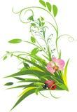 Grass and ladybird Stock Photo