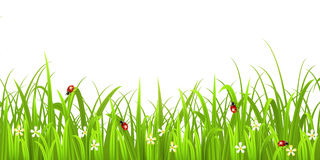 Grass with ladybird Royalty Free Stock Photo