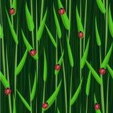Grass ladybird seamless background Stock Image