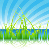 Grass on a Lake Stock Images