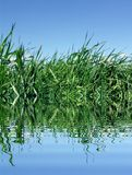 Grass and lake Royalty Free Stock Image