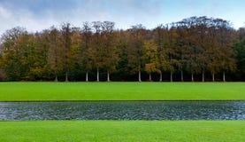 Grass lake beech tree wood royalty free stock photography