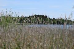 Grass at a lake stock image
