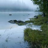 Grass, lake and fog Royalty Free Stock Photos