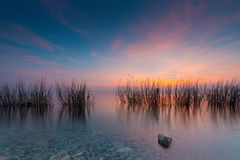 Grass in lake gardasee. At colorful red blue sunset Stock Photography