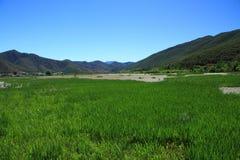 Grass Lake In Lugu Lake , China Royalty Free Stock Photography