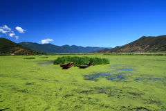 Grass lake in Lugu lake , China Stock Photo