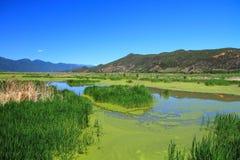 Grass lake in Lugu lake , China Royalty Free Stock Images