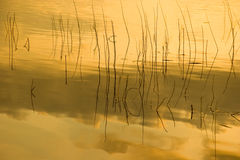Grass lake refection in golden light Stock Photos