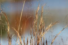 Grass by the Lake. Swaying in the breeze Stock Photos