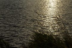 Grass with lake waves in the background royalty free stock photography