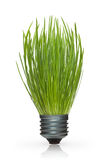 Grass in a lamp cap Royalty Free Stock Photos