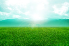 Grass Land Royalty Free Stock Photography