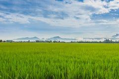 Grass Land Stock Photo
