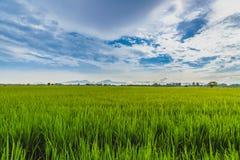 Grass Land Stock Photography
