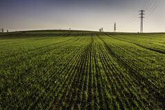 Grass land royalty free stock images