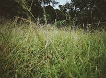 Grass land Royalty Free Stock Photo