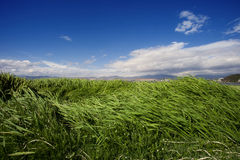 Grass land under blue sky Royalty Free Stock Image