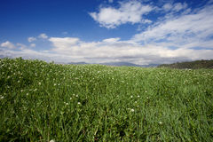 Grass land under blue sky Stock Image